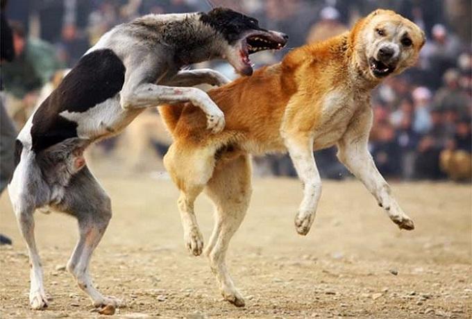 peleas-de-perro
