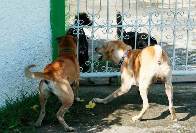 Foto ilustrativa: Adiestramiento Canino
